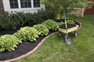 Spring-Cleaning-Your-Garden